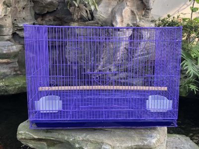 Lồng chứa chim bằng sắt sơn màu tím