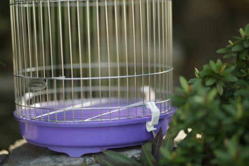 khay hưng phân lồng chim