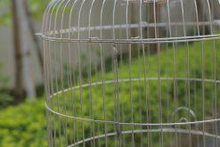 Lồng chim inox lắp ghép