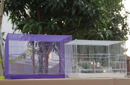 Lông tập lực cho chim loại bé