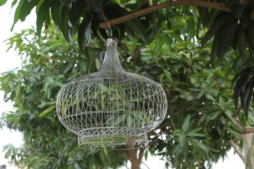 Lồng chim cu gáy bầu
